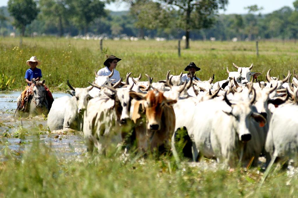 Sema disponibiliza termo de referência para autorização de limpeza de pasto no Pantanal