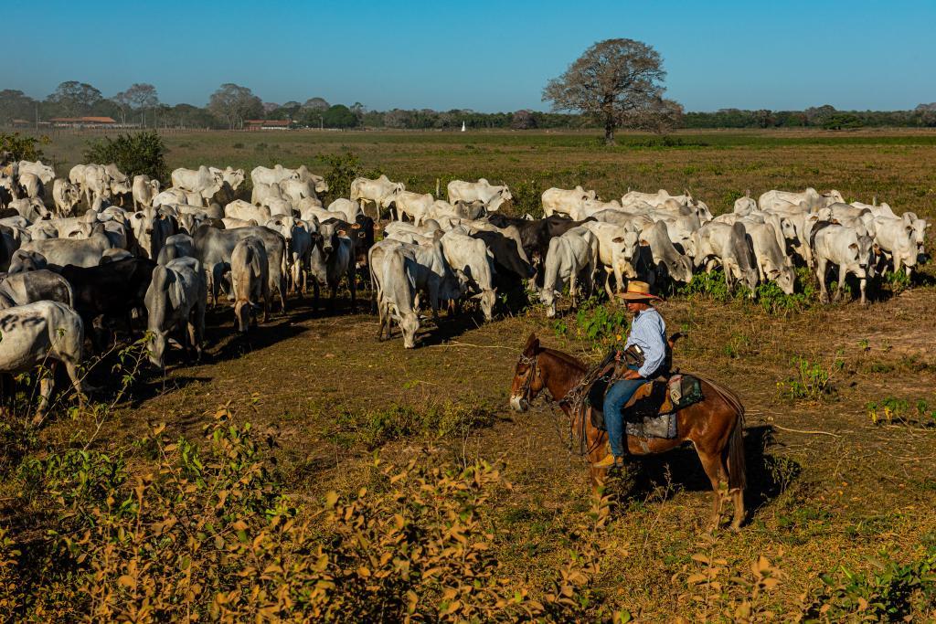 Governador assina decreto que estabelece limpeza de áreas de pastagens no Pantanal