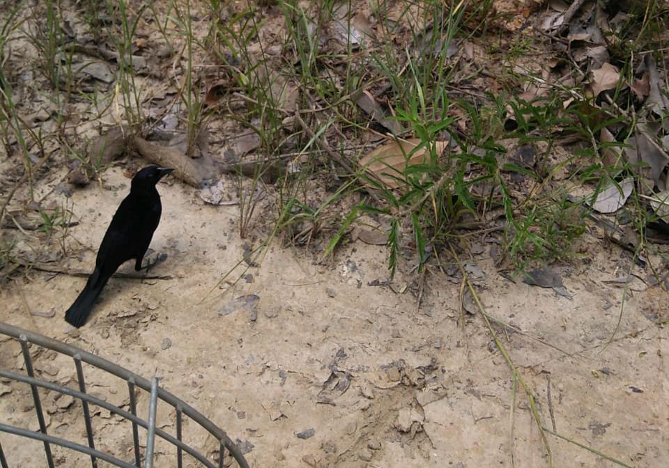 25 pássaros silvestres são devolvidos à natureza