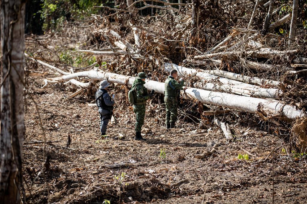 Operação Amazônia aplicou R$ 979 milhões em multa nos 7 primeiros meses do ano