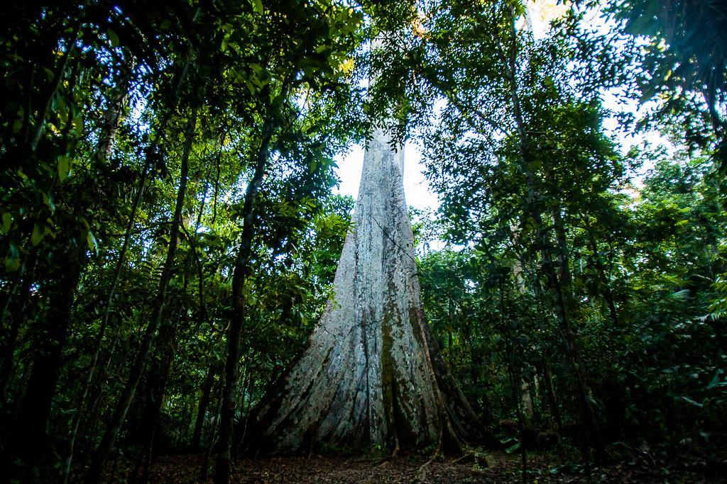 Projeto propõe ações para neutralizar emissão de gases de efeito estufa em Mato Grosso