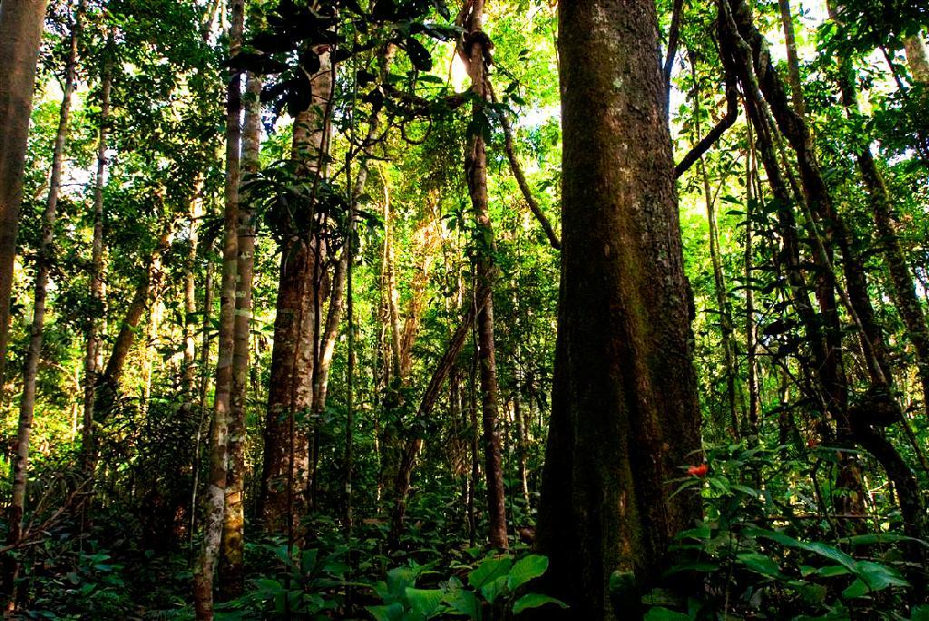 Mato Grosso fecha mês de abril com redução de 18% nos alertas de desmatamento