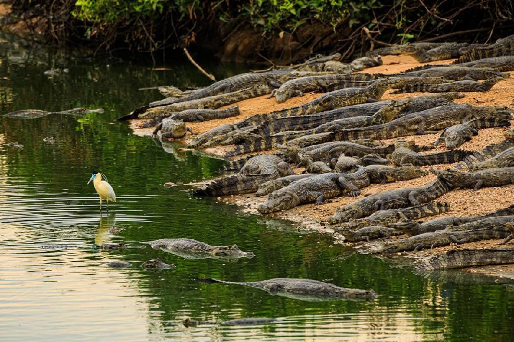 Confira o que o Governo de Mato Grosso fez e está fazendo para preservar os animais do Pantanal