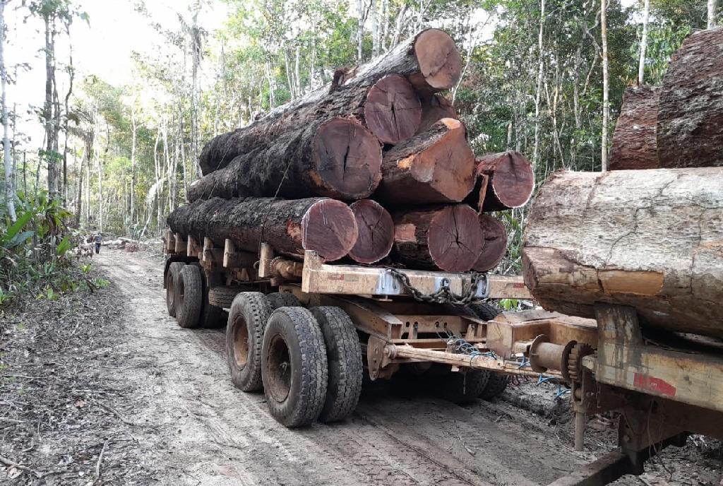 Fiscais da Sema-MT flagram desmatamento ilegal em Unidades de Conservação em Colniza