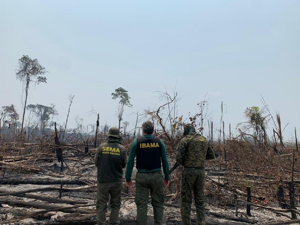 Mato Grosso reduz em 41,5% os alertas de desmatamento em agosto