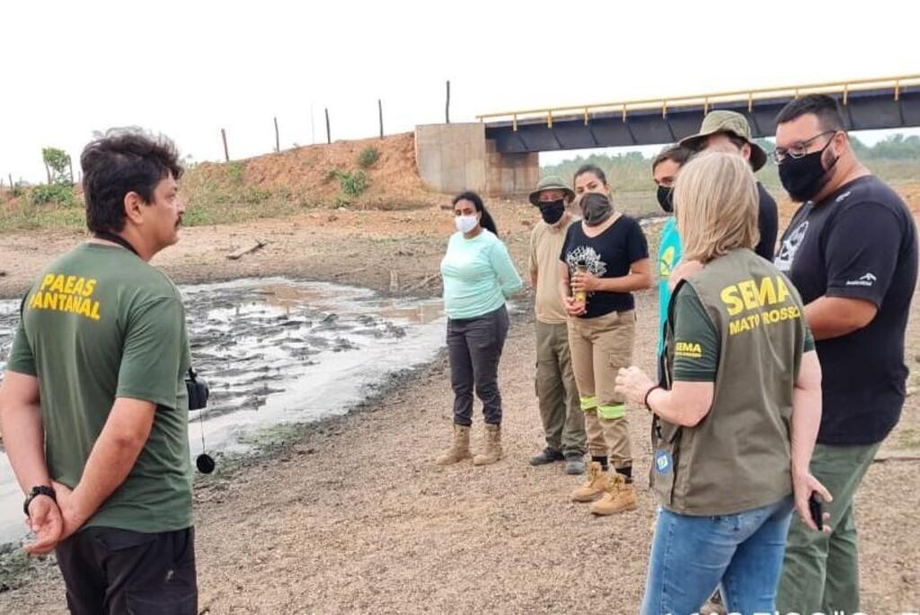 Sema colabora com pesquisa sobre condições dos jacarés no Pantanal